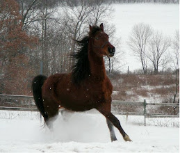 Photo: My colt, Lyric, playing in the snow