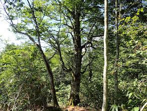こちらは立派な木が多く