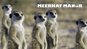 Meerkat Manor thumbnail