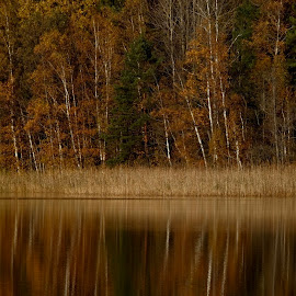 Fall by Alf Winnaess - Uncategorized All Uncategorized
