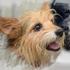 Gimli by Paul Foot - Animals - Dogs Portraits