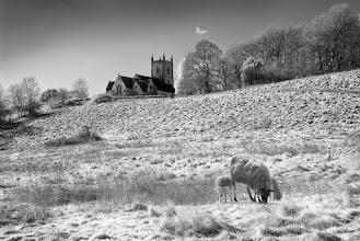 Photo: Springtime Meadow © Clive Haynes