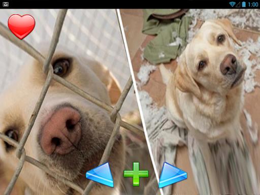 【免費娛樂App】的動物。前後住所後,-APP點子