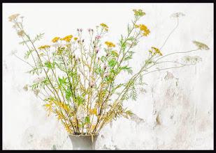 Photo: Sommerblumen