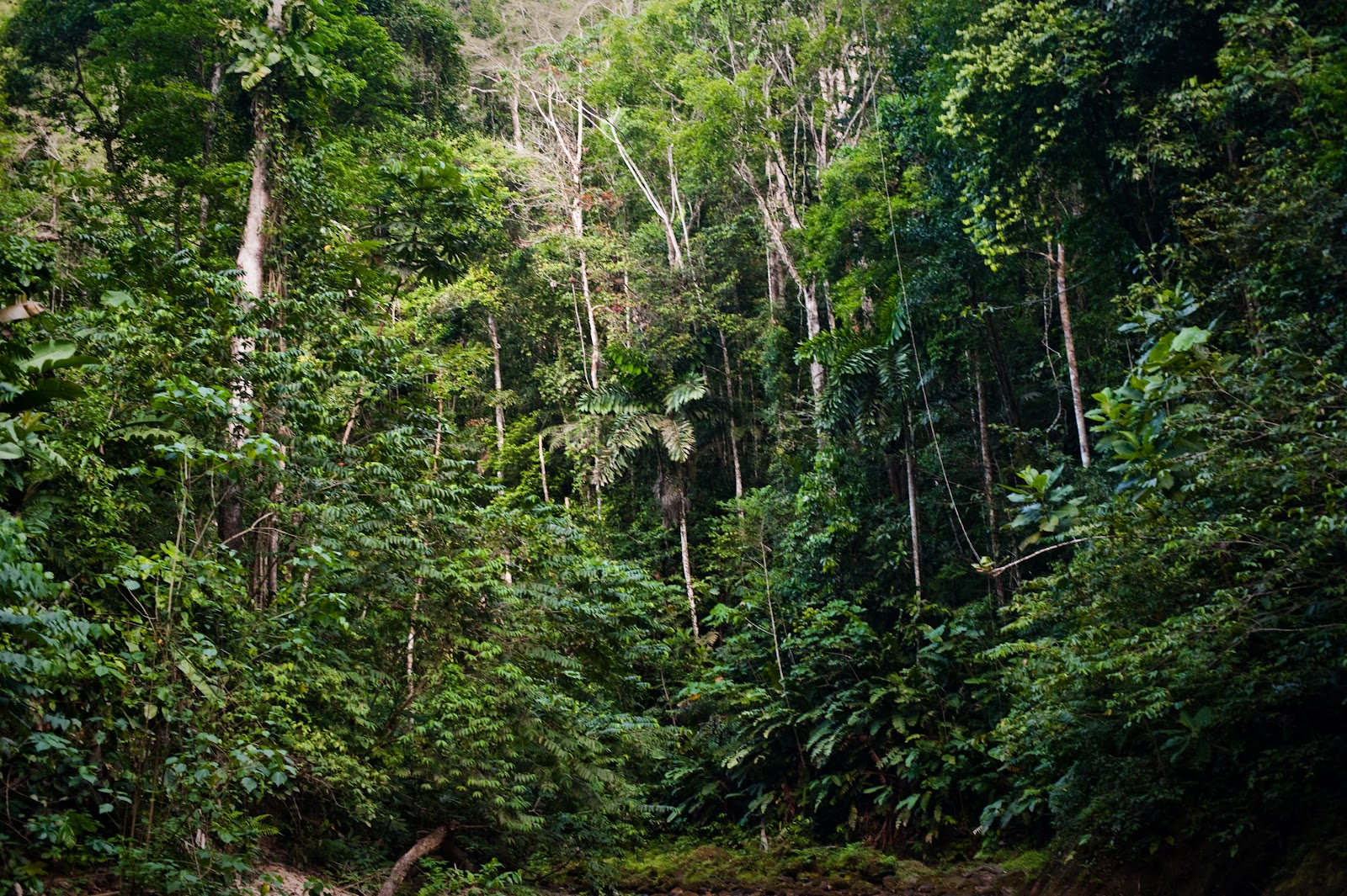 Rainforest photo by Martin Edström