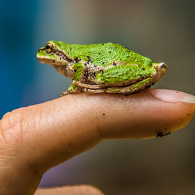Finger frog by Ivan Johnson - Novices Only Macro (  )
