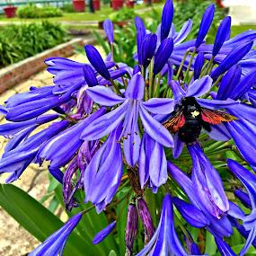 African Lily by Jo-Ann Tan - Flowers Flower Gardens