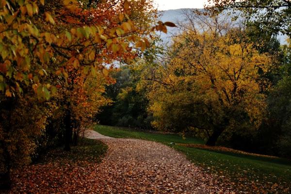 Passeggiando in autunno... di supermaio