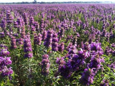 Photo: Purple Beauty in June
