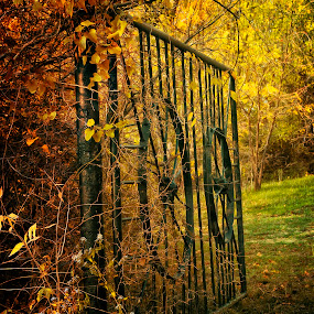 searching for a way by Ruby Del Angel - Artistic Objects Other Objects ( autumn, grass, fall, fine art, trees, weeds, landscape, gate )