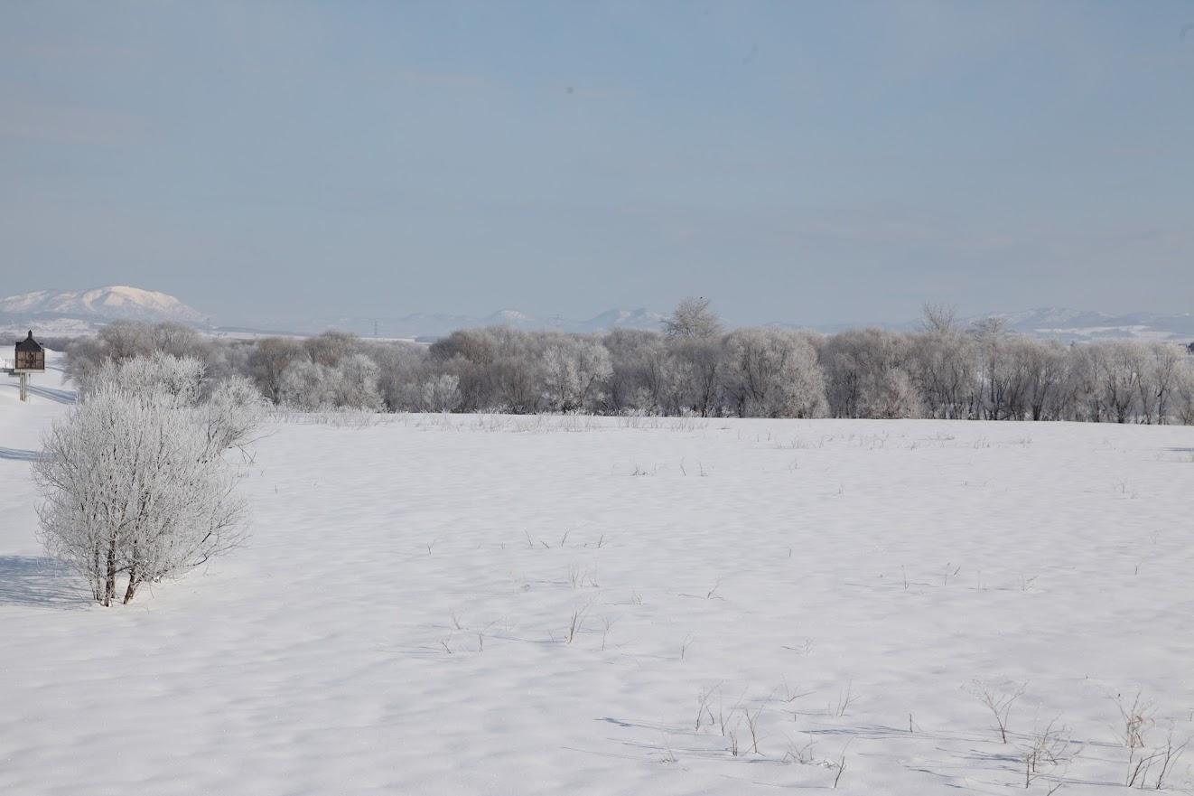 樹氷(4)
