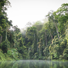 Into the rain forest by Zainol Che Omar - Landscapes Forests ( forest, morning, river )