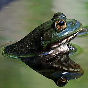 Frog Profile B5 NR.jpg