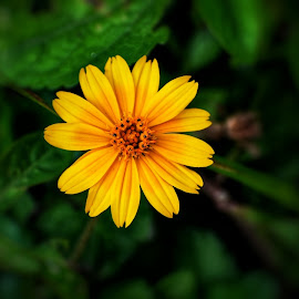 Pick Me...... by Jagadeesh Mummigatti - Flowers Flowers in the Wild