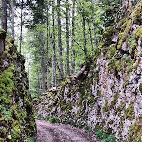 Trail in the forest  by Boban Buliga - Nature Up Close Rock & Stone ( #nature #naturelovers #natureonly #natureza #tagsforhearts #nature_seekers #nature_shooters #nature_perfection #natureporn #naturestyles_gf #naturephotography #nature_obsession #lifeinism #naturehippys #naturegram #nature_lovers #naturel #naturewalk #naturewhisperers #naturepolis #natureshot #natureshots #naturevalley #naturehub )