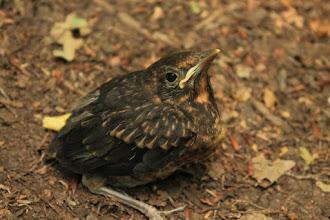 Photo: Egy kis ornitológia a Szád-vár alatt