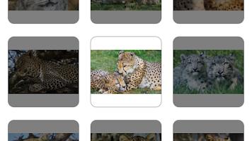 Screenshot of Kids puzzles: Animals