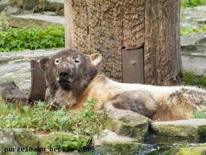 Photo: Knut wirft einen Blick zu den Besuchern ;-)