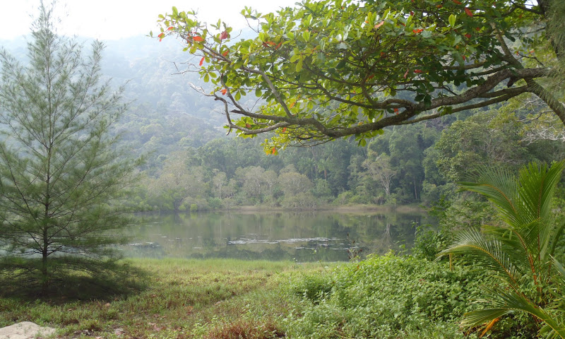 Photo: Meromictic lake, Penang National Park