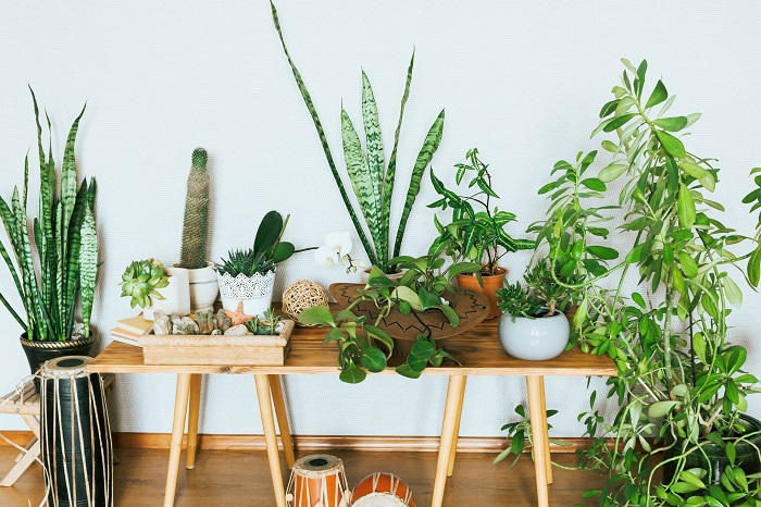 Assorted green houseplants on a bench indoors