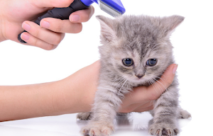 Are wax melts toxic to cats