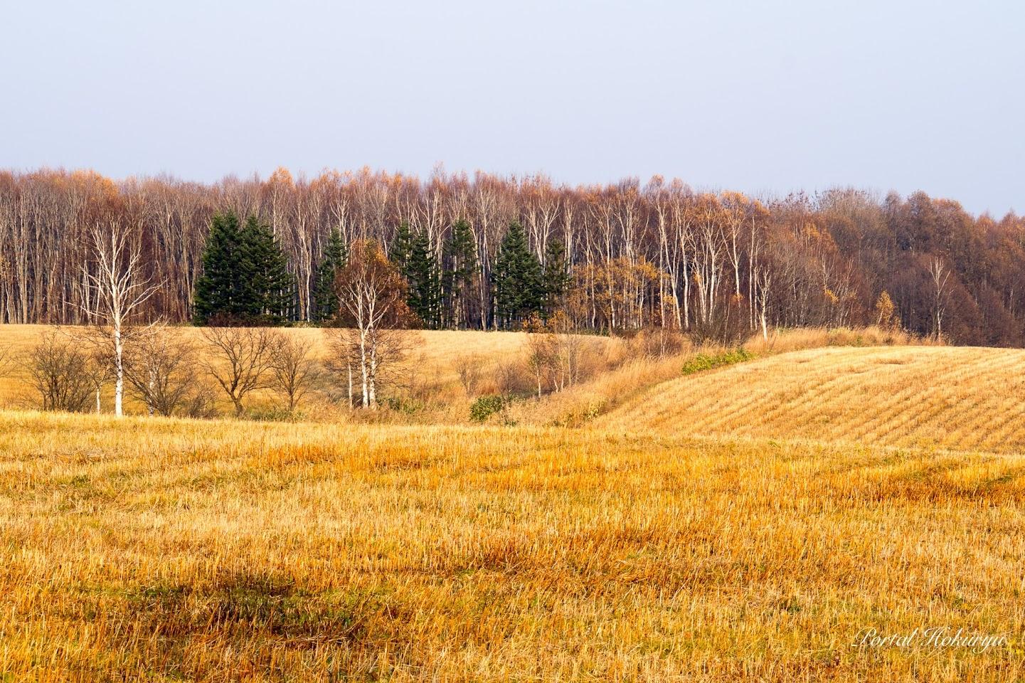冬枯れの風景
