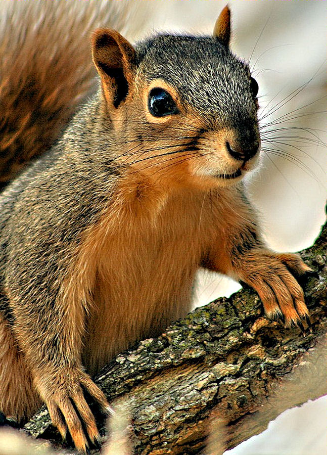 Up Close and Personal by Shelly B. - Animals Other