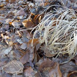 ..... by Georgi Kolev - Nature Up Close Leaves & Grasses ( слънце., треви., листа., сенки., време. )
