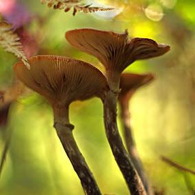 by Rod Fewer - Nature Up Close Mushrooms & Fungi ( natural light, fungi, nature, wide open, forest, supertak, mushrooms,  )