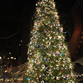 by Amy Sauer - Public Holidays Christmas