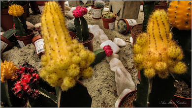 Photo: Cactus (Cactaceae), pentru o buna dispozitie, oferit de DEDEMAN in Turda  - 2019.02.21