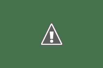 Photo: Tamarillo trees happily growing on Gyalwa Ensapa  property