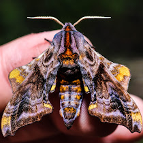 Grand River Grasslands Moth Research