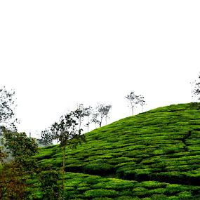 by Vijayendra Venkatesh - Nature Up Close Gardens & Produce