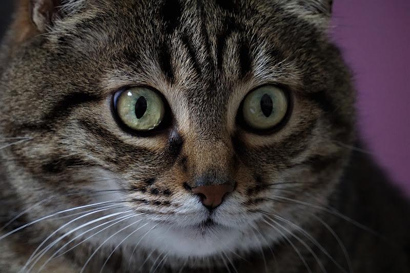 Sguardo felino di edi_danesi