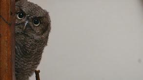 You're Owl I Need thumbnail