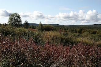 Photo: Vanhat viljelyspellot ovat pensoittuneet