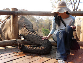 Photo: The Go2Africans were treated to an elephant encounter whilst staying at The Elephant Camp: http://www.go2africa.com/zambia/victoria-falls/victoria-falls-town/tented-accommodations/the-elephant-camp