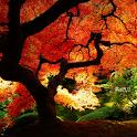 live autumn wallpaper icon