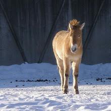 Photo: #Zoológico en #invierno #nieve