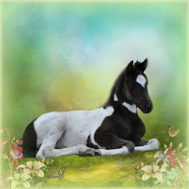 Peaceful Spring by Valerie Hill - Painting All Painting ( butterfly, peaceful, horse, flowers, springtime )
