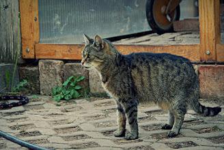 Photo: Kotełka wychodząca. Lat 20. Da się? Da się.