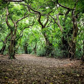 Swamp forest RATARGUL,BANGLADESH by মেহরাব সাদাত - Landscapes Forests (  )