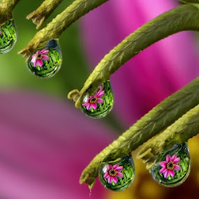 by Margie MacPherson - Nature Up Close Natural Waterdrops (  )
