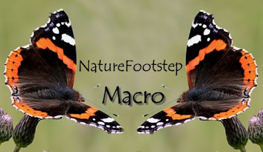 Photo: NatureFootstep Macro http://nfmacro.blogspot.com/