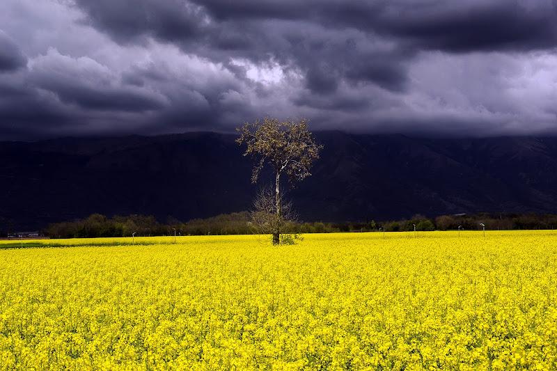 la quiete prima della tempesta di Winterthur58
