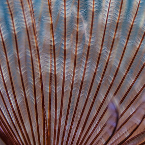 Feathered by Craig Pifer - Abstract Fine Art ( abstract, sea creature, aquarium, pwclines, lines, portland aquarium )