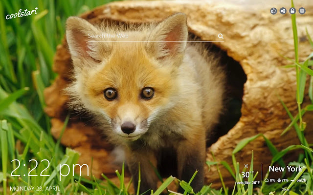 Foxes HD Wallpapers Wild Animals Theme