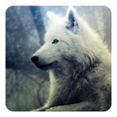 Wolf howl sound Widget