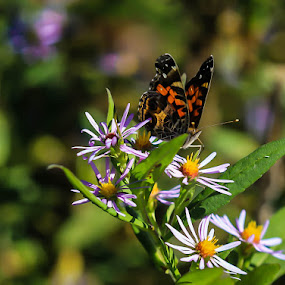 Enjoying The Day by Keith-Lisa Bell Bell - Animals Insects & Spiders ( up close, butterfly, nature, colorful, flower )